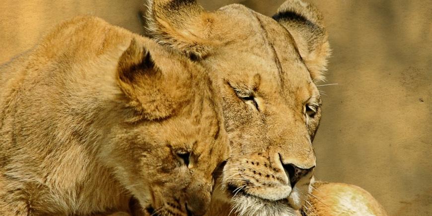 Mi instinto de mamá leona